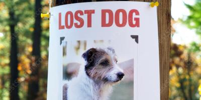 lost dog movies