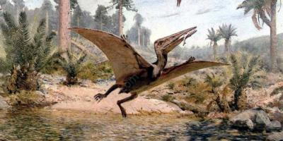 pterodactyl movies