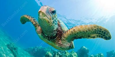 sea turtle movies