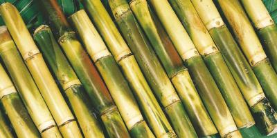 sugarcane movies