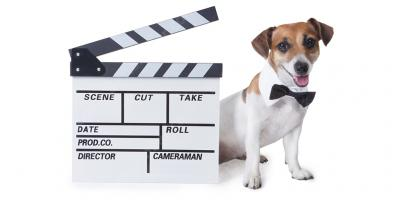 dog actor movies