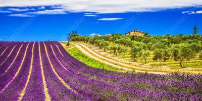 provence movies