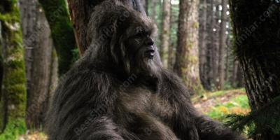 sasquatch movies