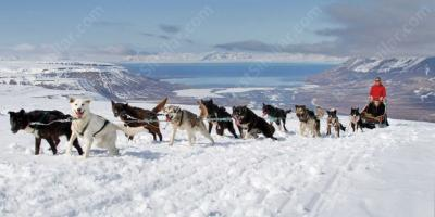 dog sled movies