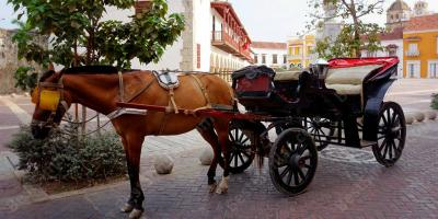 horse carriage movies